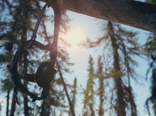 "Alaska ""The Great Land"" – Trailer"